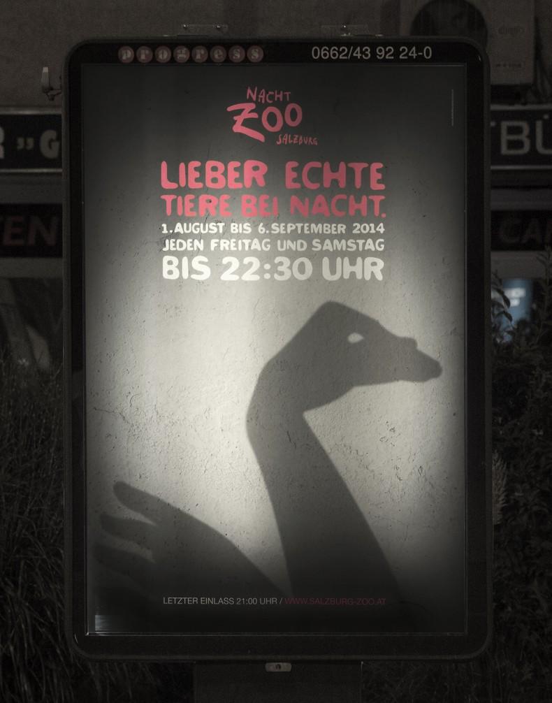 Nacht-Zoo Salzburg – Plakat mit Schwan